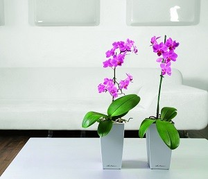 Mini-Cubi-SiIver-on-table-top-with-orchids.jpg