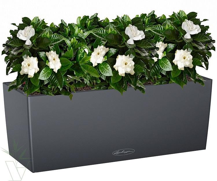 Gardenia Интернет Магазин Растений Отзывы