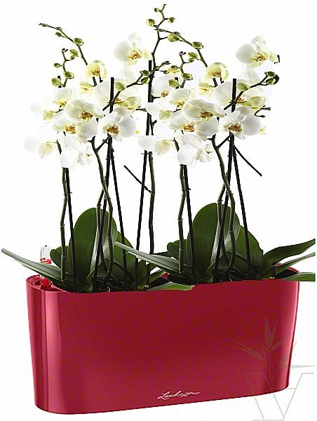 Вазон орхидея картинки